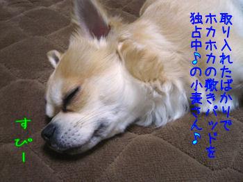 komugiokan_0306_001