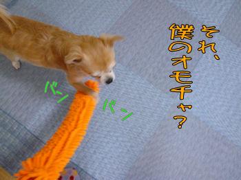 komugiokan_0328_002