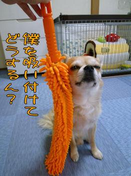 komugiokan_0328_004