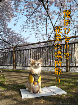 komugiokan_0410_003
