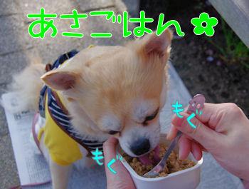 komugiokan_0410_005