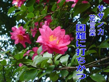 komugiokan_0411_001