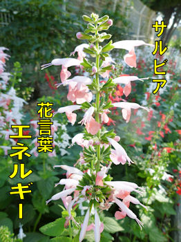 komugiokan_0411_002