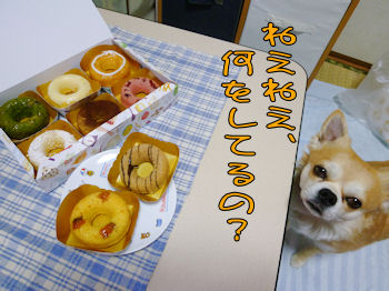komugiokan_0419_005