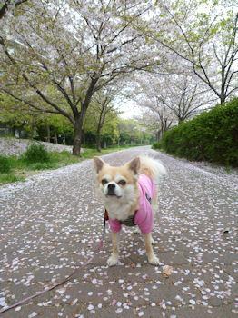 komugiokan_0421_001