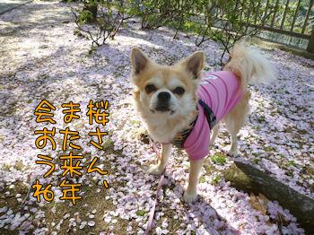 komugiokan_0421_003