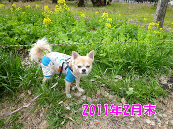 komugiokan_0426_001