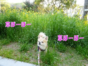 komugiokan_0426_002