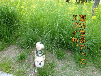 komugiokan_0426_003