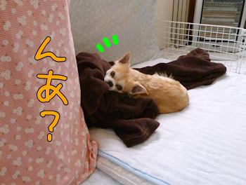 komugiokan_0502_002