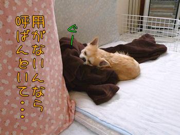 komugiokan_0502_003