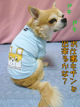 komugiokan_0406_004