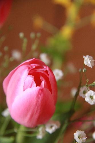 01flower0001.jpg