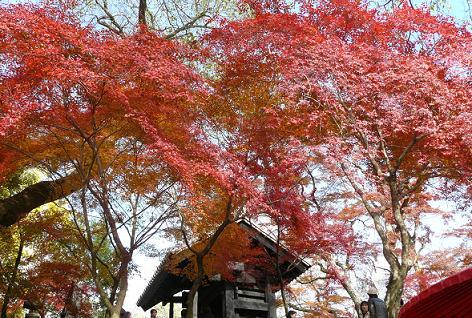 秋月・黒門の紅葉