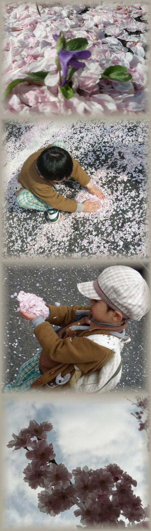どうぶつえん桜