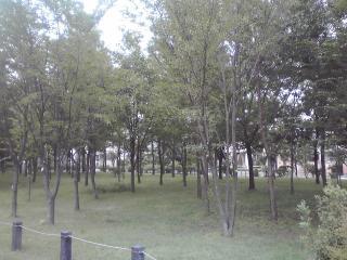 かしのみや雑木林