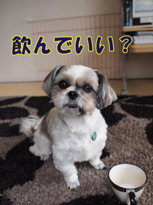 001_20110501114147.jpg