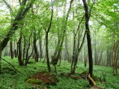 三ツ頭から下った樹林帯