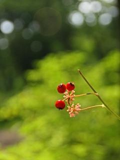 2009.8.20日光植物園 081