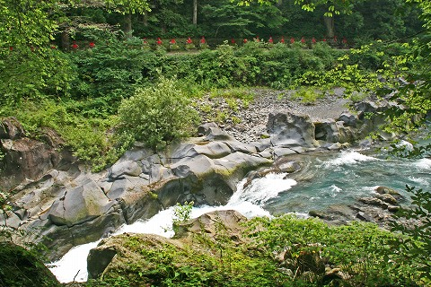 2009.8.20日光植物園 062