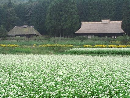 2009.9.29匠の館 喜連川コスモス 009