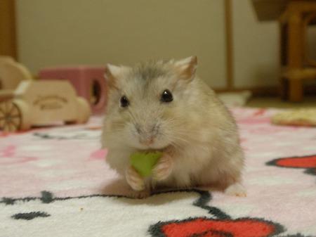 枝豆とコーン、どっちが好き?
