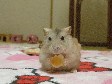 チーズだいすき!