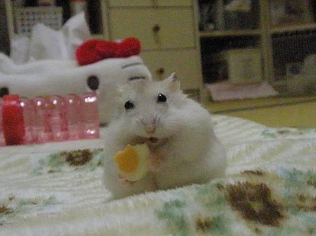 チーズでしゅ!