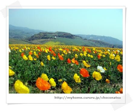 image2011481.jpg