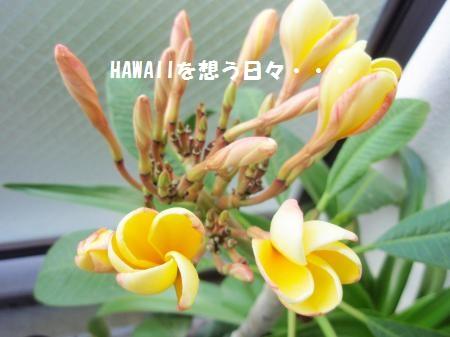 P6253424_convert_20110628093427.jpg