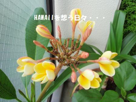 P6273429_convert_20110628093552.jpg