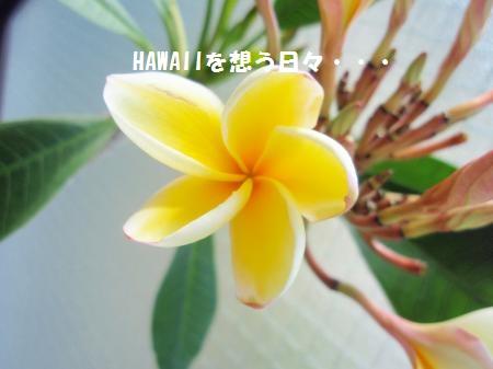 P6283434_convert_20110628093755.jpg
