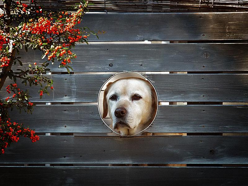 111213犬窓
