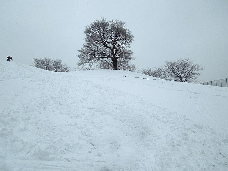 120229雪の日5
