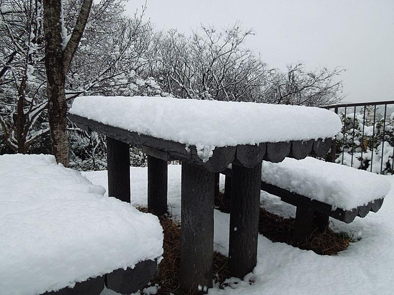 120229雪の日3