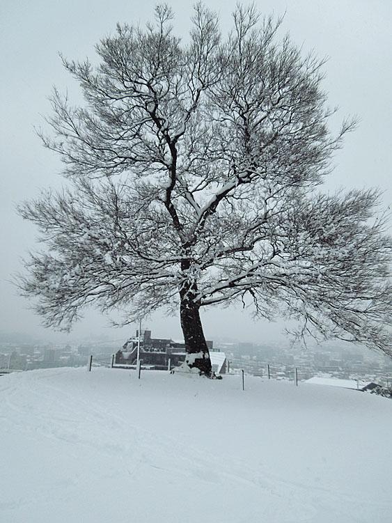 120229雪の日2