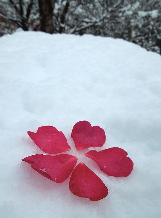 120229雪の日7
