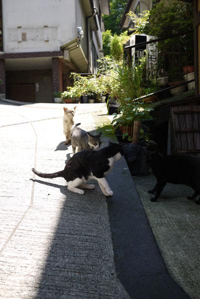 kurokawa12.jpg
