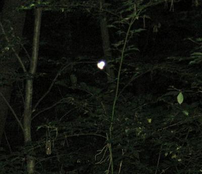 山梨の森の精霊