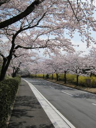 2011_0417富士宮御用邸0023