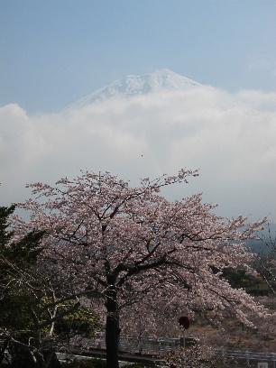 2011_0417富士宮御用邸0038