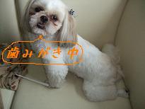 2008_072110010.jpg