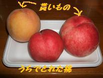 2008_081010004.jpg