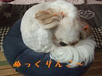 2008_102310003.jpg