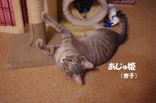 2011_0126toppo0033.jpg
