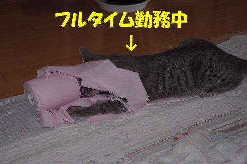 2011_0222toppo0045.jpg