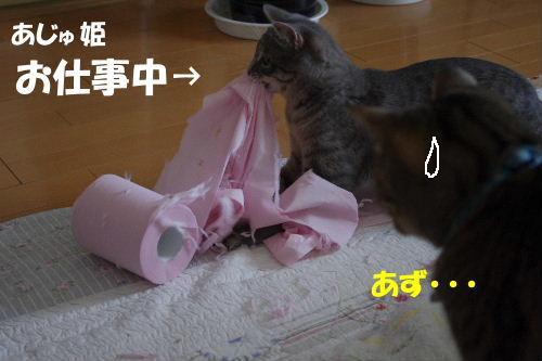 2011_0222toppo0047.jpg