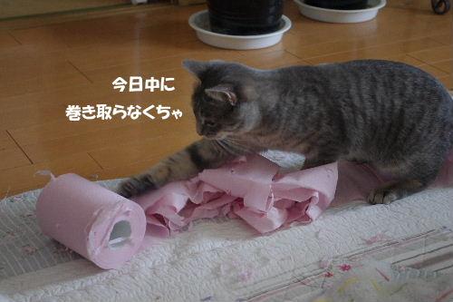 2011_0222toppo0050.jpg
