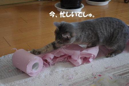 2011_0222toppo0051.jpg