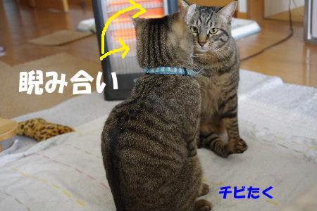 2011_0222toppo0056.jpg